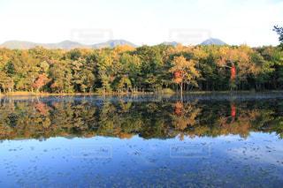秋,絶景,紅葉,湖,カラフル,北海道,水鏡,知床,ラッキー,知床五湖,希望,フォトジェニック,インスタ映え
