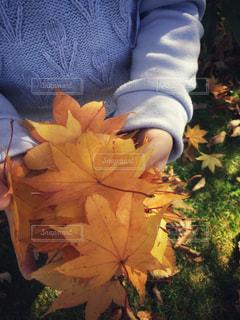 自然,秋,紅葉,手,もみじ,北海道,女の子,少女,人物,いっぱい,人,未来,函館,ポジティブ,複数,紅葉狩り,フォトジェニック,溢れる,インスタ映え