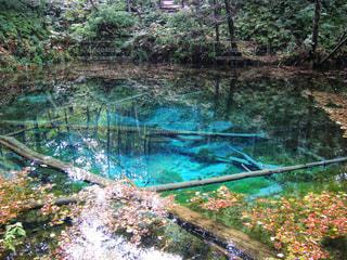 神の子池にての写真・画像素材[1597915]