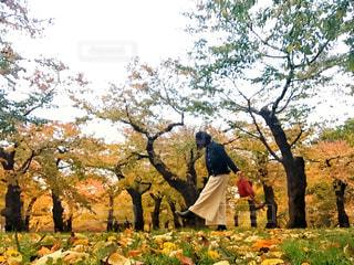 桜の紅葉の下に立っている女性の写真・画像素材[1609495]