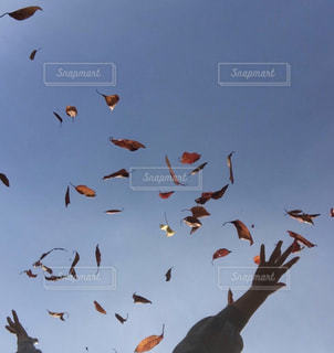 宙を舞う葉っぱと手の写真・画像素材[1610252]