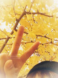 黄色い銀杏の木の下にいる女性の写真・画像素材[1610302]