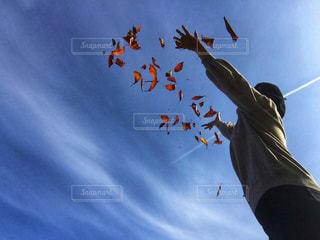 女性,空,秋,紅葉,青空,青,葉っぱ,手,人物,人,ひとり,未来,飛行機雲,夢,散る,秋空,ポジティブ,希望,舞う,桜の葉っぱ
