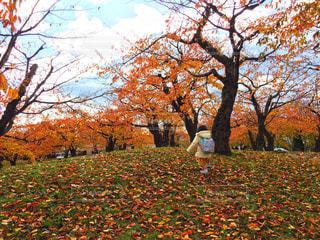五稜郭公園の紅葉と少女の写真・画像素材[1613469]