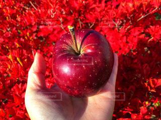 赤いリンゴを持つ手の写真・画像素材[1613522]