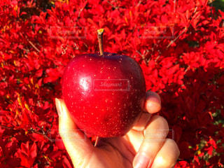 赤い林檎を持っている人の写真・画像素材[1613528]