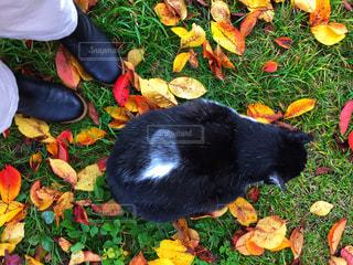 猫とわたしの写真・画像素材[1622749]