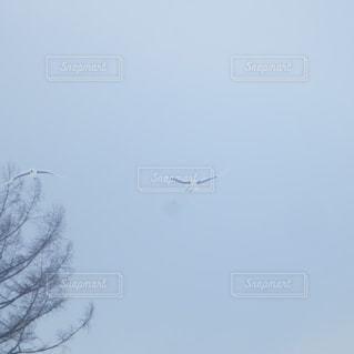 雪,白,北海道,飛ぶ,鶴,丹頂鶴
