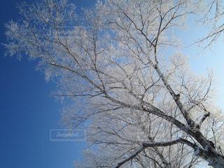 白,北海道,氷,寒い,霧氷