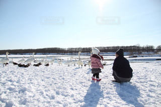 女性,雪,親子,北海道,子供,女の子,少女,仲良し,人物,寒い,白鳥,ふたり,鴨,野鳥,母,ホワイト,はじめまして,お母さん,挨拶,一緒,こんにちは,群