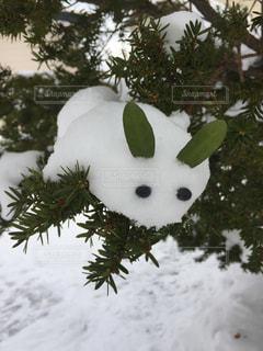 うさぎ,木,白,樹木,ホワイト,バランス,びっくり,雪うさぎ