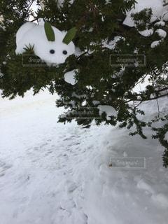 うさぎ,木,白,楽しい,樹木,ホワイト,バランス,びっくり,雪うさぎ