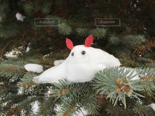 うさぎ,木,樹木,フォトジェニック,雪うさぎ,インスタ映え