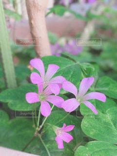 植物にピンクの花の写真・画像素材[1792795]