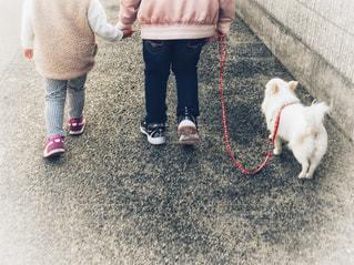 犬の散歩の写真・画像素材[2007067]