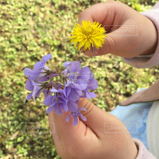 花,春,手,女の子,人物,人,可愛い,たんぽぽ,スミレ,ファンシー
