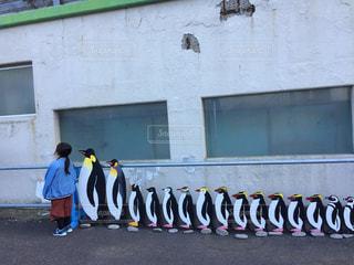 ペンギンと後姿の写真・画像素材[2603303]