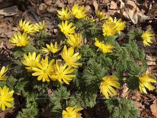 黄色い花束の写真・画像素材[3140057]