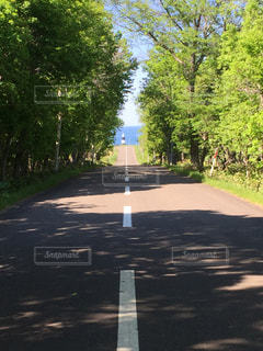 通りの側に木がある空の道路の写真・画像素材[3273120]