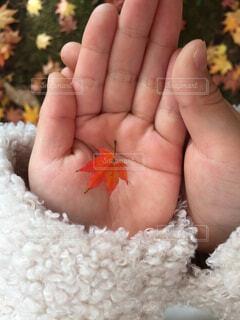 秋,紅葉,手,もみじ,子供,手持ち,人物,人,小さい,可愛い,ポートレート,ライフスタイル,手元