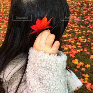秋,紅葉,赤,手,もみじ,子供,手持ち,樹木,人物,人,髪飾り,小さい,可愛い,ポートレート,ライフスタイル,手元,カエデ
