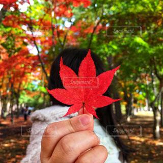 秋,紅葉,赤,手,葉,もみじ,子供,手持ち,樹木,人物,人,小さい,可愛い,ポートレート,ライフスタイル,手元,カエデ