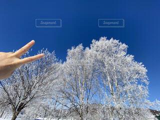 冬,雪,青空,寒い,運動,ピース,樹氷,極寒,ウィンタースポーツ,霧氷,ジェスチャー
