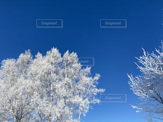 木々が霧氷に覆われていましたの写真・画像素材[4103638]