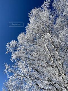 霧氷と青空の写真・画像素材[4103647]