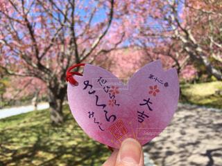 桜みくじを持つ手の写真・画像素材[4272528]