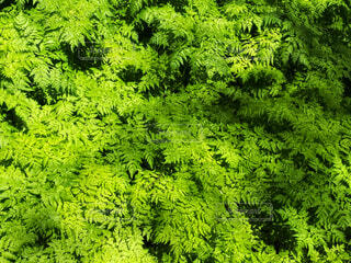 森の中の緑の植物の写真・画像素材[4409359]