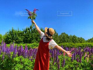 ルピナスの花畑で花束を持つ女性の写真・画像素材[4561403]