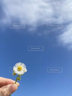 花を持つ手の写真・画像素材[4610854]
