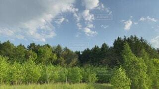 空,夏,木,屋外,緑,雲,北海道,木々,樹木,蝉,草木,6月,鳴き声,蝉の声,蝦夷蝉