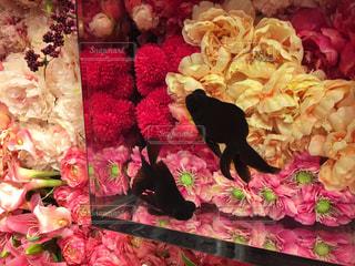 ピンク,金魚,ピンク色,奈良県,出目金,金魚ミュージアム,ミナーラ