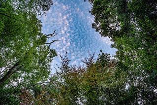 空,秋,木,雲,うろこ雲,秋空,草木,鱗雲,ウロコ雲