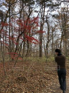 森の横に立っている人の写真・画像素材[1615177]