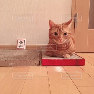 オレンジと白の猫がテーブルの上に座っているの写真・画像素材[2102956]