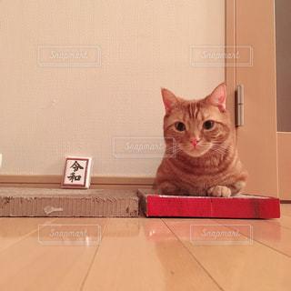 オレンジと白の猫が箱に座っているの写真・画像素材[2102957]