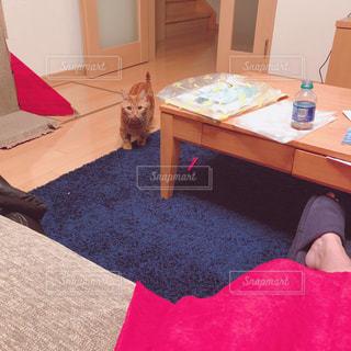 赤い敷物を持つテーブルに座っている人の写真・画像素材[2507235]