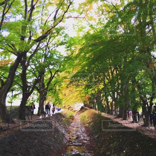 秋,紅葉,秋の空