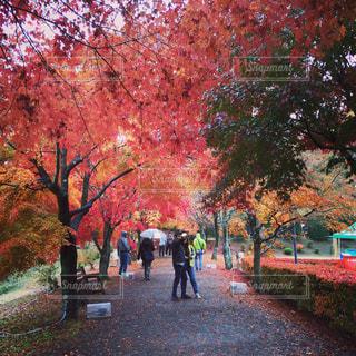 秋,紅葉,旅行,秋の空,秋の散策