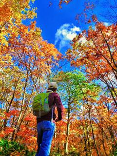 男性,1人,自然,空,紅葉,森林,木,屋外,植物,雲,青空,後ろ姿,ウォーキング,帽子,山,登山,旅行,旅,健康,ハイキング,リュック,蔵王,秋空,草木,おじさん,カエデ,フォトジェニック,多色