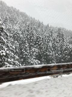 冬,木,雪,白,山,積雪,初雪,冬の雪山