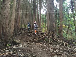 女性,2人,自然,山,登山,木の根,女子2人