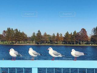 空,鳥,屋外,水面,グループ