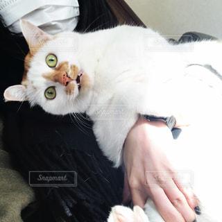 うちの猫の写真・画像素材[1476569]