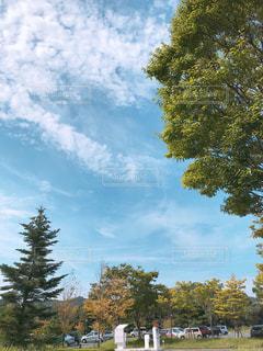 公園の大きな木の写真・画像素材[1482687]