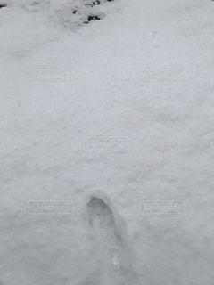 雪,足跡,白い