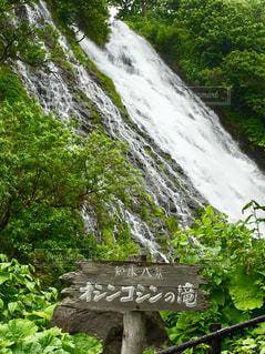 オシンコシンの滝の写真・画像素材[1499104]